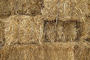 Finding a copywriter in Singapore is like finding a needle in a haystack