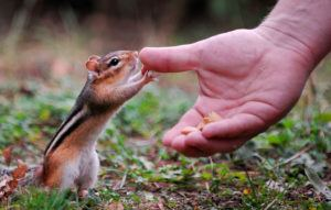 Hand reaching out to a squirrel